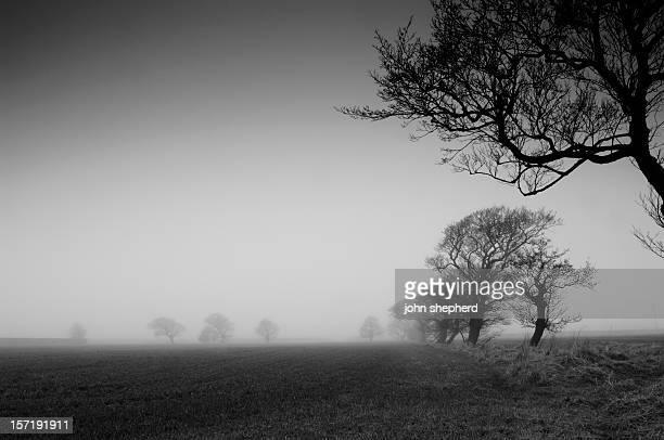 farmland en hiver Brouillard