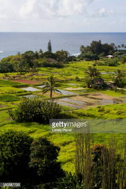 Farmlands at Ke'anae on road to Hana.