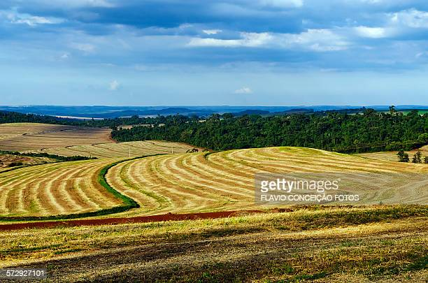 farms Brazil agriculture