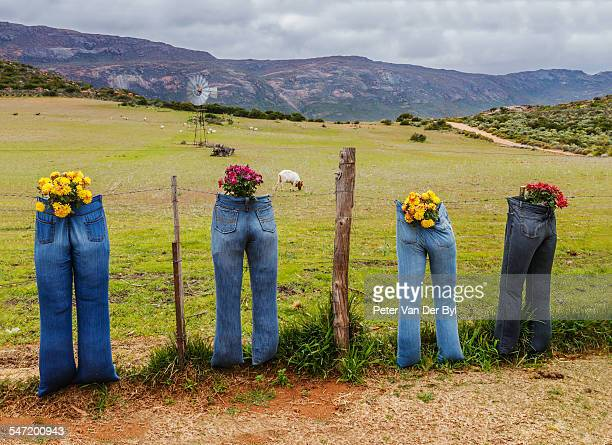 Farmyard scene. A collection of blue jeans used as flower containers and looking out over the farm meadows. Keeping an eye on things. Kamieskroon, Western Cape, South Africa.