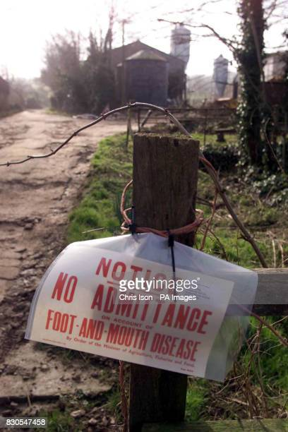 Farringford Farm at Freshwater Bay on the Isle of Wight where Ministry of Agriculture officials are investigating the possibility of an outbreak of...