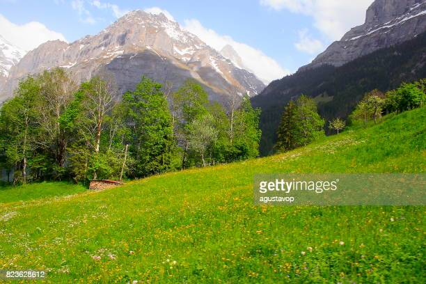 Fary tale landscape at blossoming springtime: above idyllic Grindelwald alpine  valley and meadows, dramatic swiss snowcapped Wetterhorn alps, idyllic countryside, Bernese Oberland,Swiss Alps, Switzerland