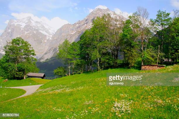 Fary tale landscape at flowers springtime: above idyllic Grindelwald alpine valley and meadows, dramatic swiss snowcapped Wetterhorn alps, idyllic countryside, Bernese Oberland,Swiss Alps, Switzerland