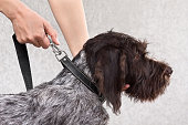 hands fastening the leash to collar of dog