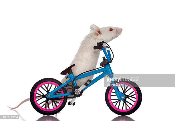 Fat White Mouse Walking His Bicycle