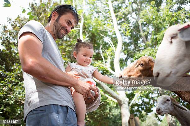 Father and baby daughter feeding goats at zoo