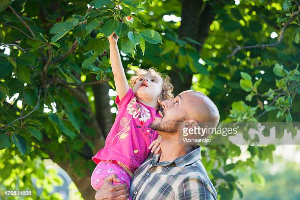 Father and daughter picked fresh organic fruits on a tree