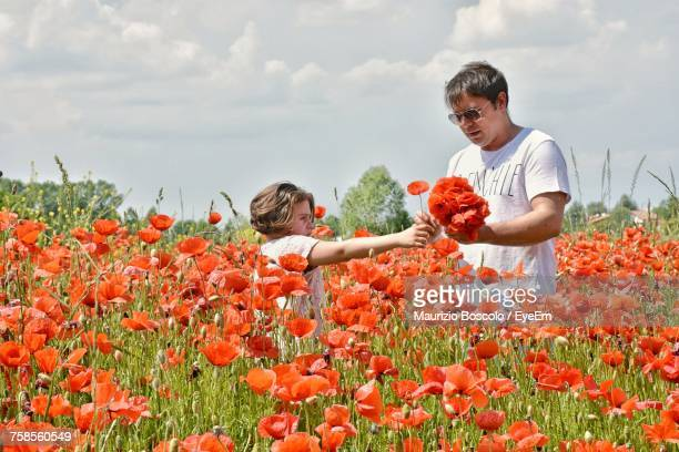 Father And Daughter Picking Poppies From Farm Against Cloudy Sky
