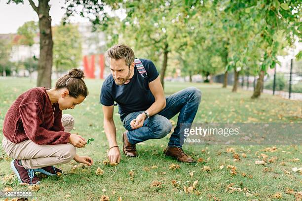 father and daughter picking up hazelnuts