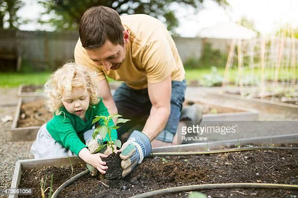 Père et sa fille, planter le jardin