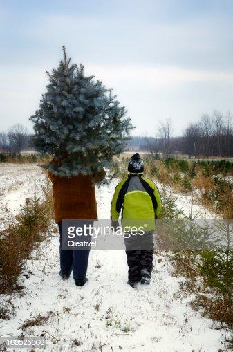 Pai e filho A cortar a sua própria Quinta de árvores de Natal