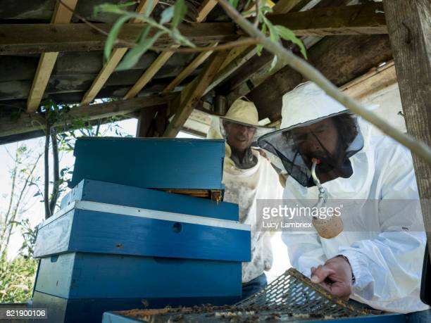 Father and son beekeeping