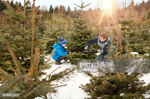 Father and son cutting their Christmas tree in the forest, Bavaria, Germany : Stockfoto