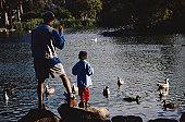 Father and Son Feeding Ducks