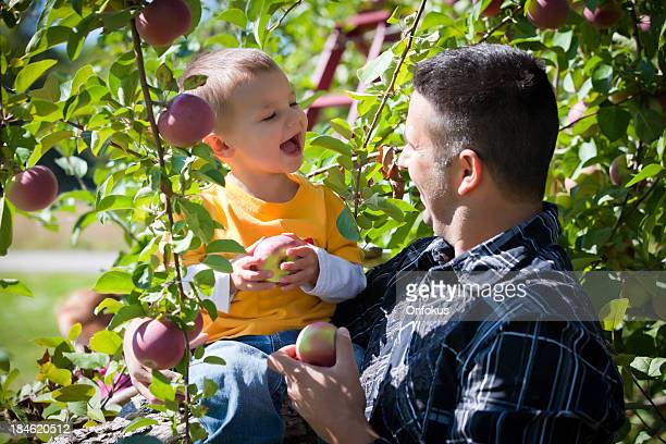 Father and son in a orchard picking apples