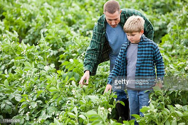 Father and son in potato field