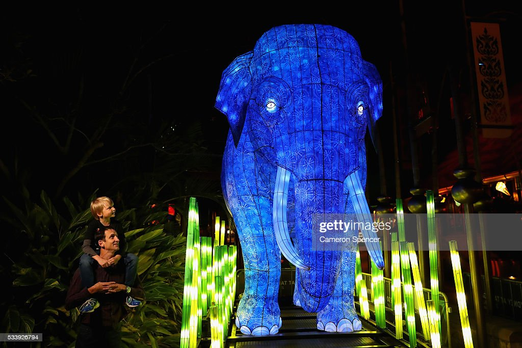 A father and son look at an Asian Elephant light sculpture during a media preview of Vivid Sydney illuminated displays at Taronga Zoo on May 24, 2016 in Sydney, Australia. Vivid is lighting up at Taronga Zoo for the first time with ten giant animal sculptures representing critical species the zoo is committed to protecting. Held annually, Vivid Sydney is the world's largest festival of light, music and ideas running for 23 days.