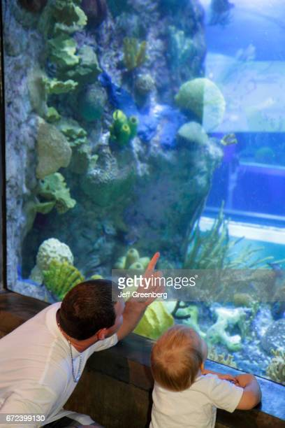 A father and son looking at a stingray in the underwater Caribbean reef walkthrough tunnel at Audubon Aquarium of the Americas