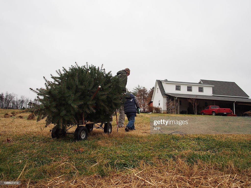 A father and son pull out their freshly cut Christmas tree at Ridgefield Farm in Harper's Ferry, West Virginia, December 9, 2012. Tree growers report growing demand among consumers for smaller and more natural looking trees. AFP PHOTO / Robert MacPherson