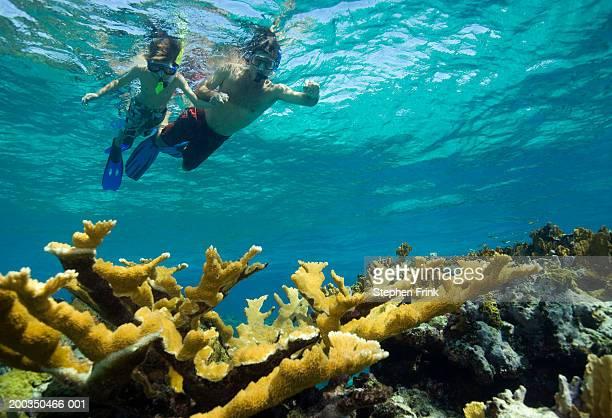 Father and son (8-10) snorkel above Elkhorn coral (Acropora palmata)