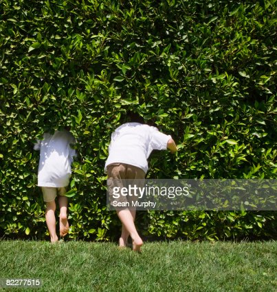 Father and son walking into hedge, rear view