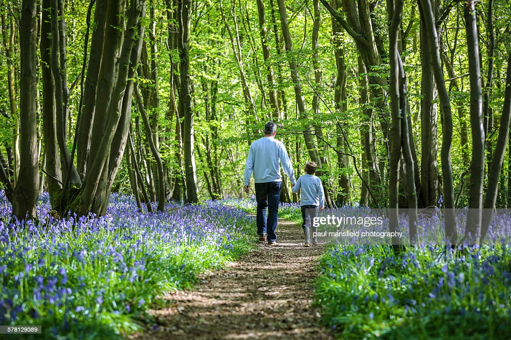 Father and son walking through bluebell wood
