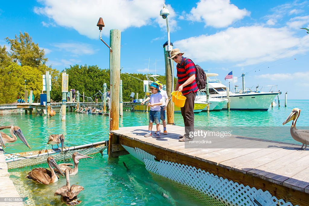father and two little kid boys feeding fishes and pelicans : Stock Photo