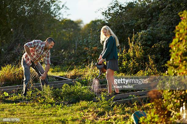 Father & daughter working in vegetable garden
