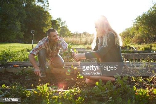 Father & daughter working in vegetable garden