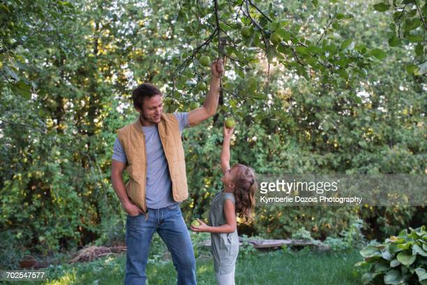 Father helping daughter reach apple on tree