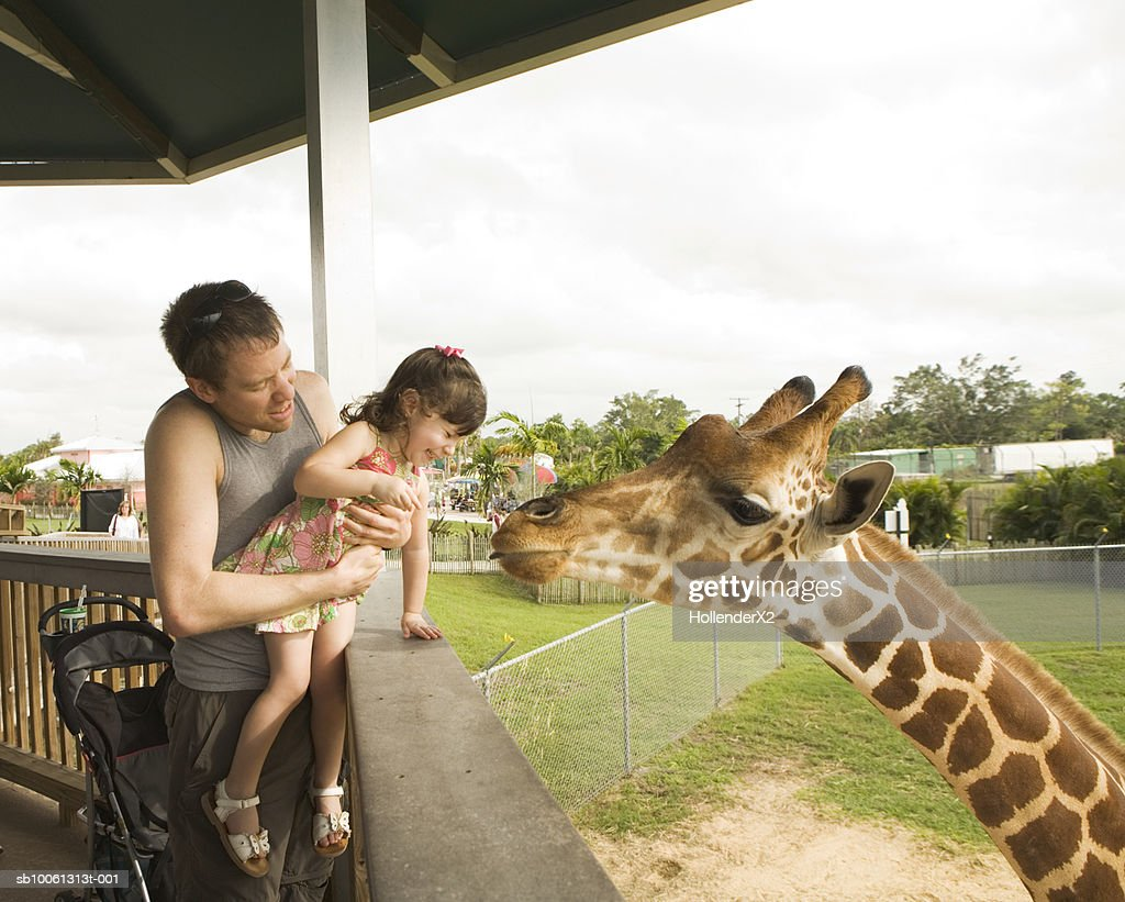 Father holding daughter (2-3) up to see giraffe : Stock Photo
