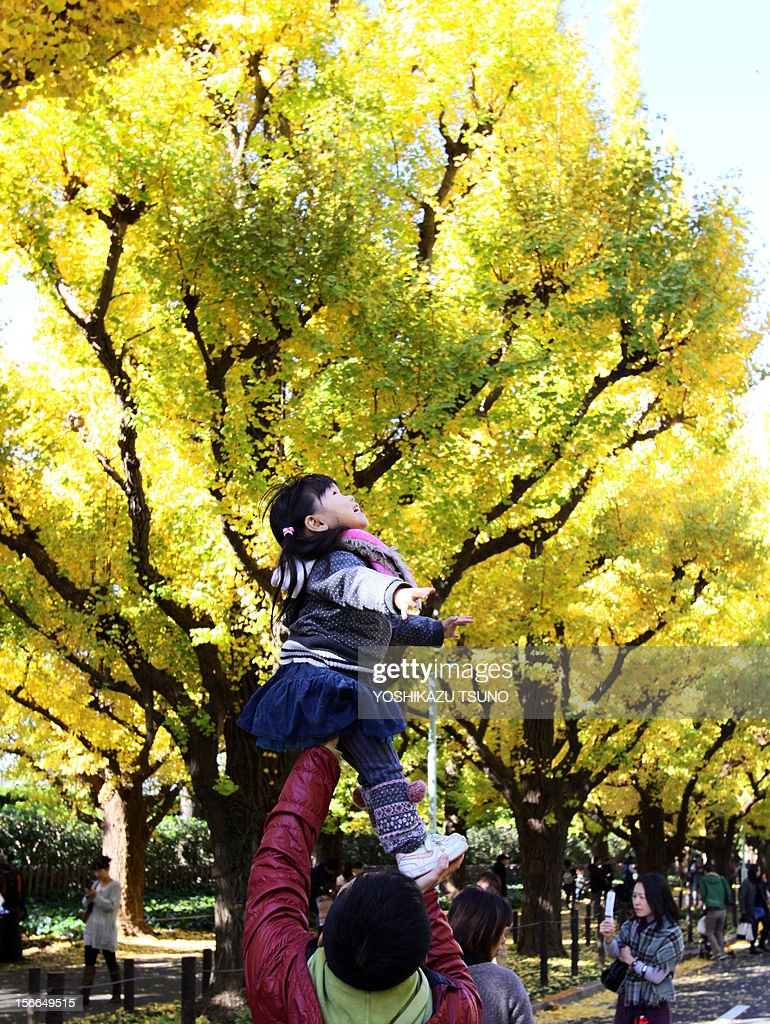 A father holds up his daughter yellow ginkgo tree leaves in Tokyo on November 18, 2012. Local residents came out to admire some 150 ginkgo trees displaying their autumnal colors along the tree-lined promenade. AFP PHOTO / Yoshikazu TSUNO