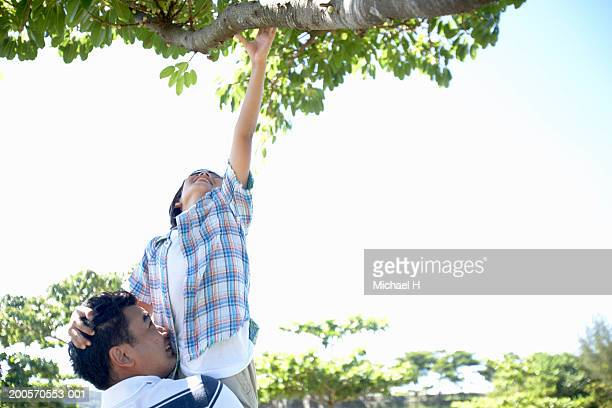 Father lifting son (8-9) up to tree branch