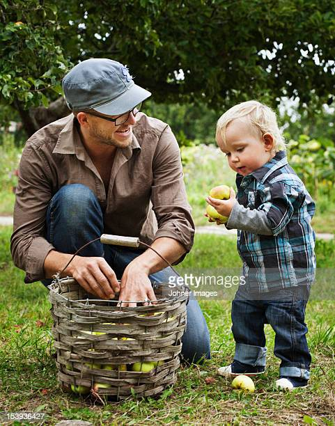 Father picking apples with his young son