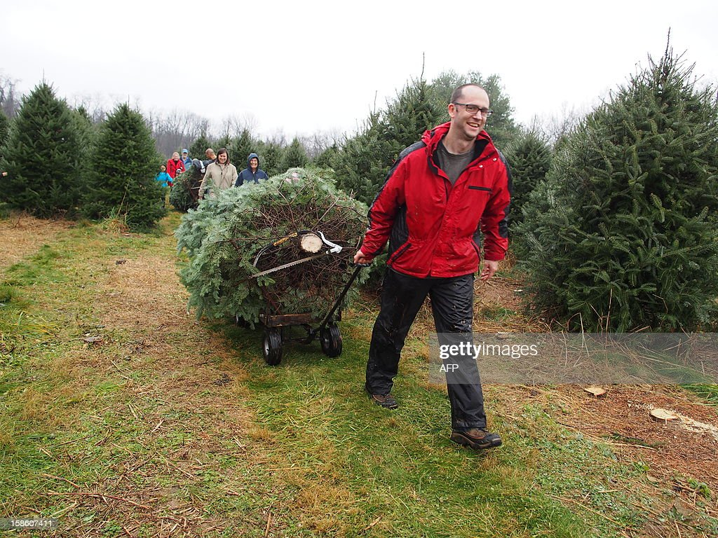 A father removes a freshly-cut Christmas tree at Ridgefield Farm in Harper's Ferry, West Virginia, December 9, 2012. Tree growers report growing demand among consumers for smaller and more natural looking trees. AFP PHOTO / Robert MacPherson