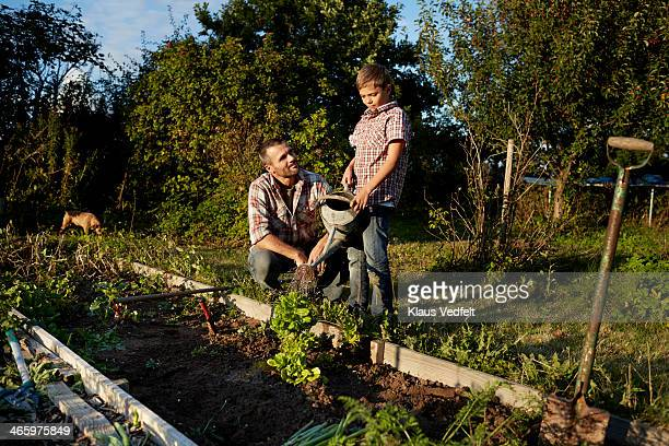 Father & son watering plant in garden