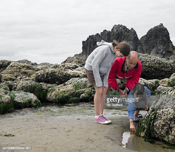 Father with children (8-13) searching tide pool on beach