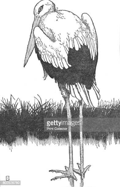 FatherStork' c1930 An illustration from 'The Storks' by Hans Christian Andersen From Hans Andersen's Fairy Tales by Hans Andersen [Hodder and...
