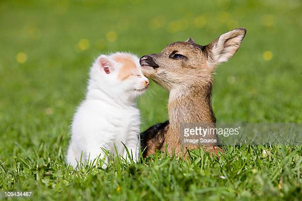 Fawn and kitten sitting on grass