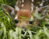 """""""D100,1/250s,f3.2,200mm,ISO 200.  A newborn fawn does such a good job imitating grass that it even fooled a grasshopper into thinking it's grass."""""""