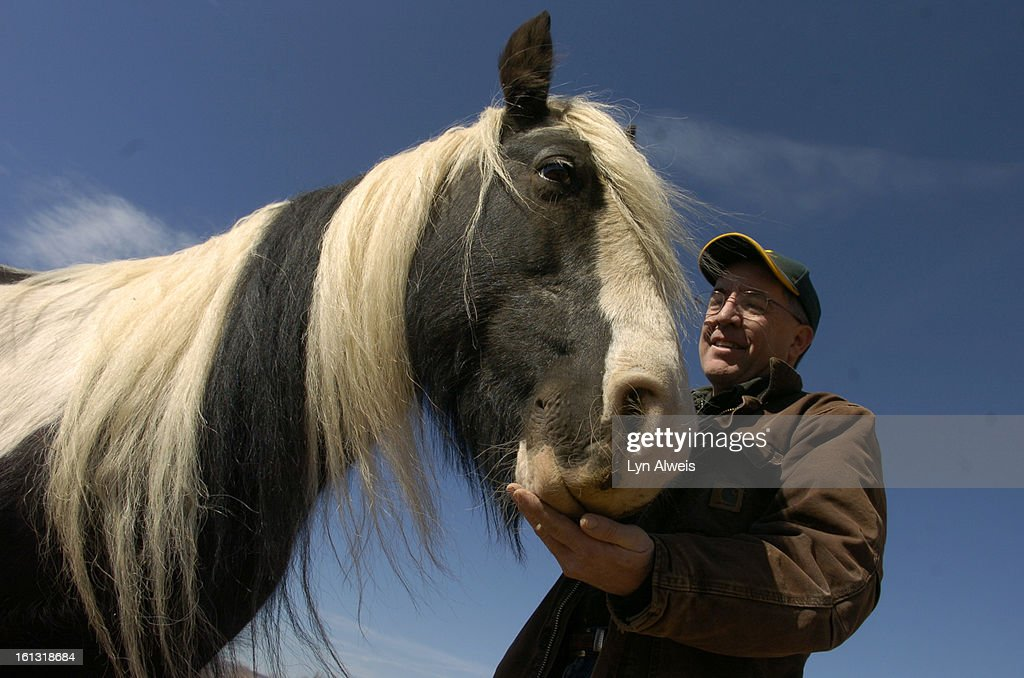 fe16cshorses_031108_LA_003_Charlie Parnell Cox greets 'Muireann' his Irish Cob horse a type of horse from Ireland He and his wife Jan Cox own...
