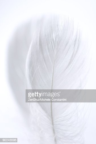 Feather, close-up