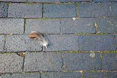 Feather lying on the ground