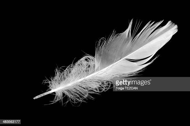 En plumes
