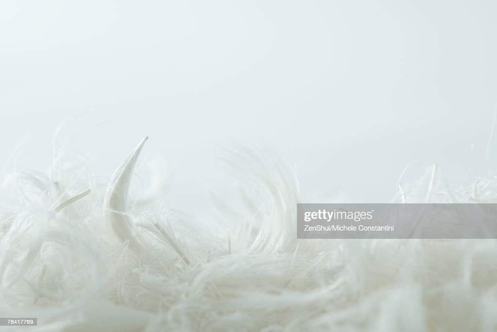Feathers, extreme close-up