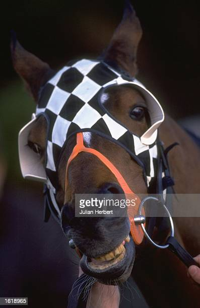 A blinkered racehorse at Lingfield Mandatory Credit Julian Herbert /Allsport