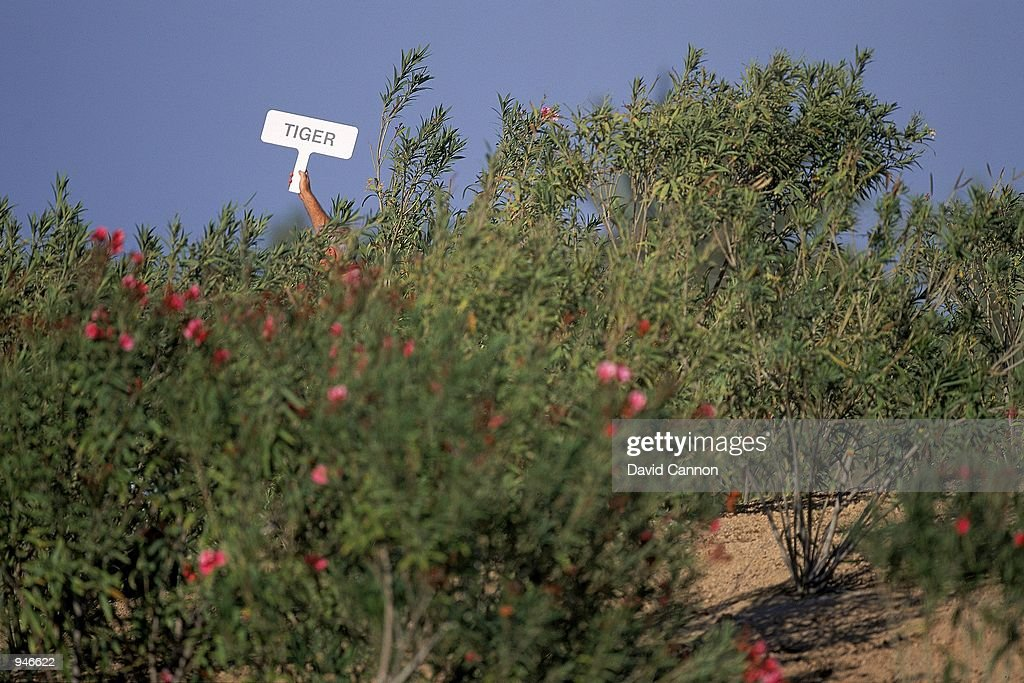 Tiger Woods of the USA finds the bushes during a practice round before the Dubai Desert Classic at the Emirates GC in Dubai. \ Mandatory Credit: David Cannon /Allsport