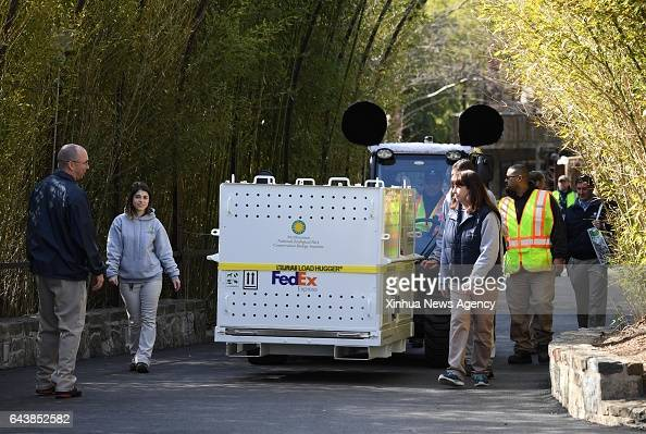 C Feb 21 2017 Animal keepers of Smithsonian's National Zoo escort the crate of giant panda Bao Bao when leaving the zoo en route back to China in...