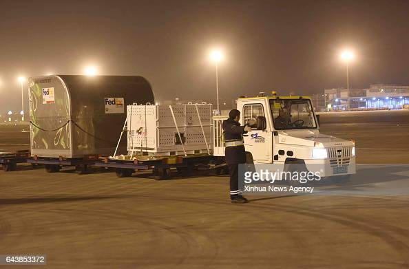 CHENGDU Feb 22 2017 Giant panda Bao Bao is being transferred at Chengdu Shuangliu International Airport in Chengdu capital of southwest China's...