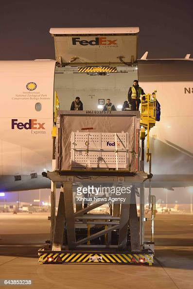 CHENGDU Feb 22 2017 Giant panda Bao Bao is carried out of the cabin at Chengdu Shuangliu International Airport in Chengdu capital of southwest...